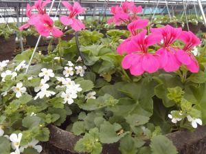 flowers, gregor farm